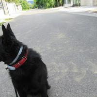Kutyakeményen