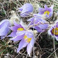 A tavasz költészete, Nagykovácsiban