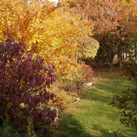 Mit ültessünk a kertünkbe, Nagykovácsiban? - 3. fejezet