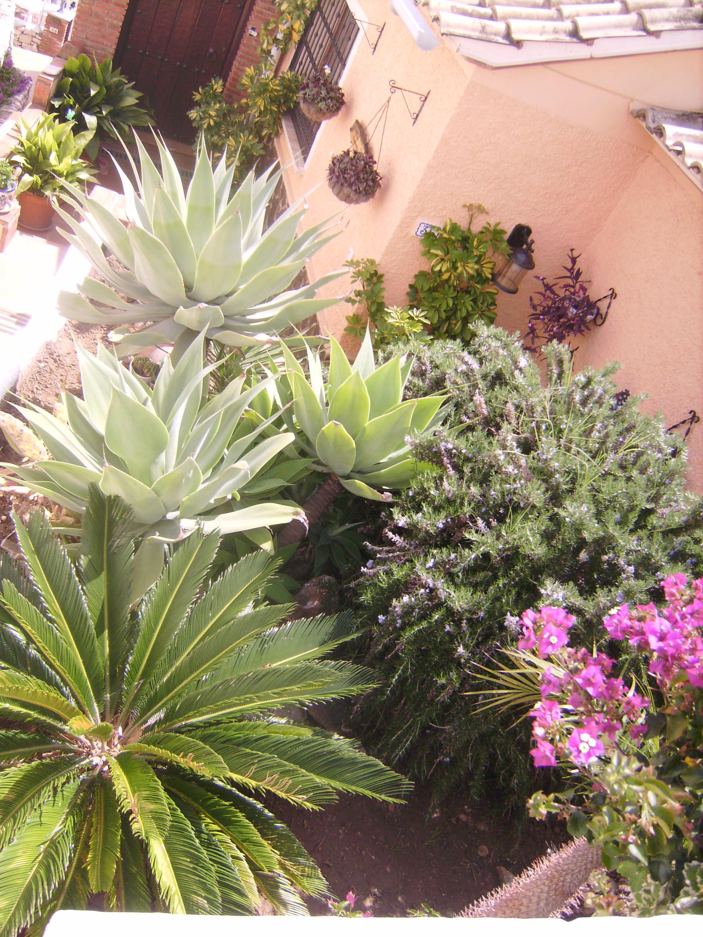 a számunkra egzotikus növényekkel.