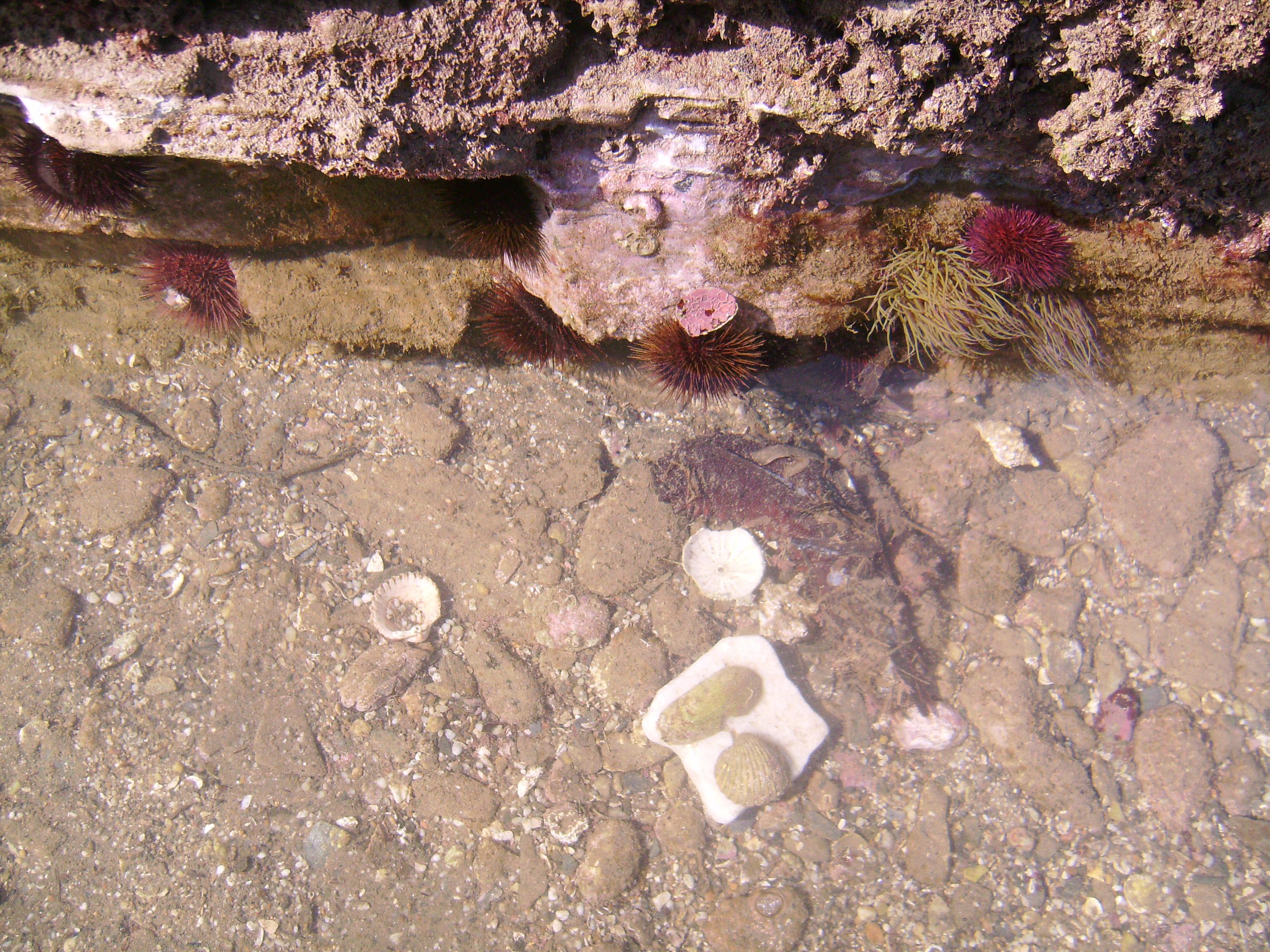 Hajtottad már kagylóra füledet? Rózsaszín kőfodrai közt<br />hallottad már a tengert? Hallottad már a kagylóban a csöndet?<br />Ahol a csönd van, ott a tenger. Ahol a csönd van, ott a zúgás. <br />