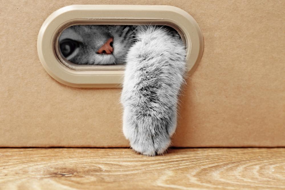 Macskás videók és a cicaviláguralom eszközei