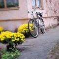 poszt bringával és sárga krizantémokkal