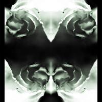 szembe-fordított tükrök