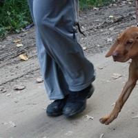 Nándi első sétája