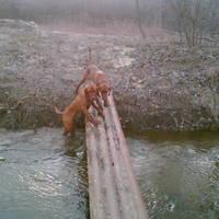 Császárvíz, Kisfalud