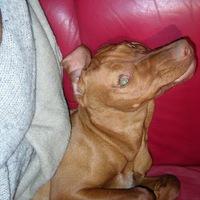 és Carlos kutyám